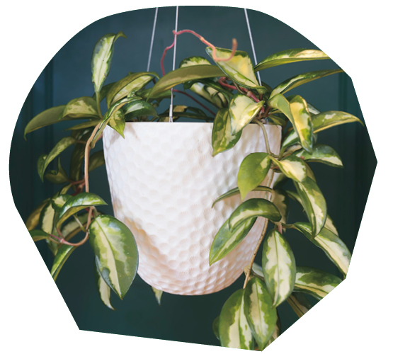 The Best Plant Pots to Buy Now