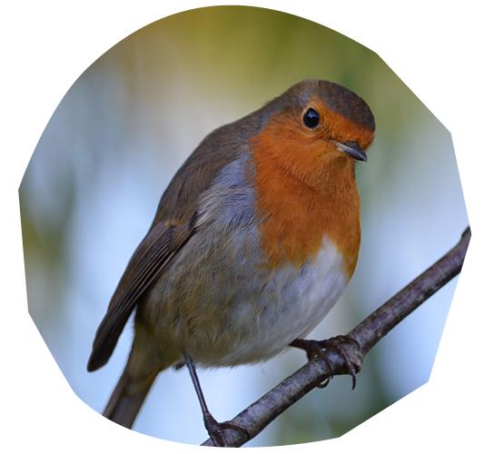 Timothy Beatley on 'Bird-Friendly' Cities