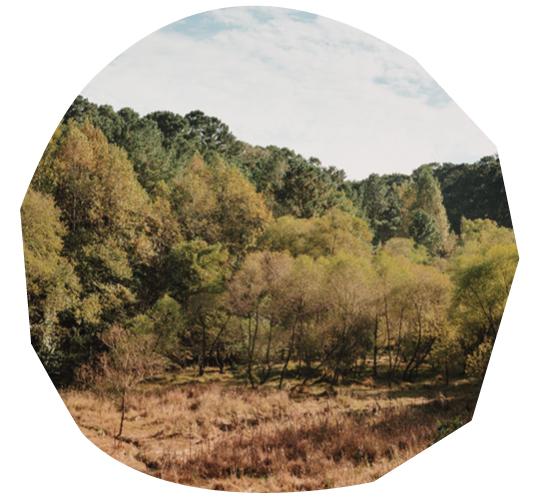 Atlanta's Lake Charlotte Nature Preserve Conservation Efforts